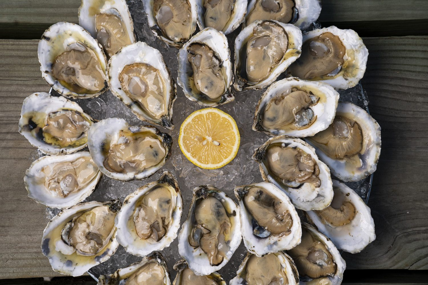 oysters to eat